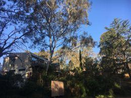 Home among the gumtrees